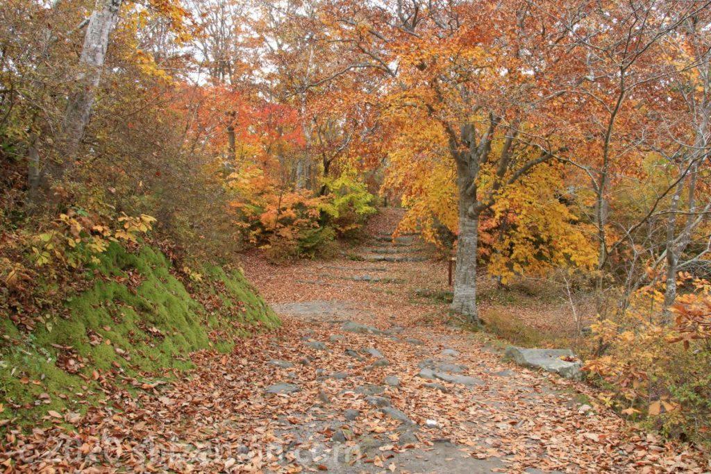 木々の紅葉と落ち葉で一面がオレンジに染まる大沼公園遊歩道