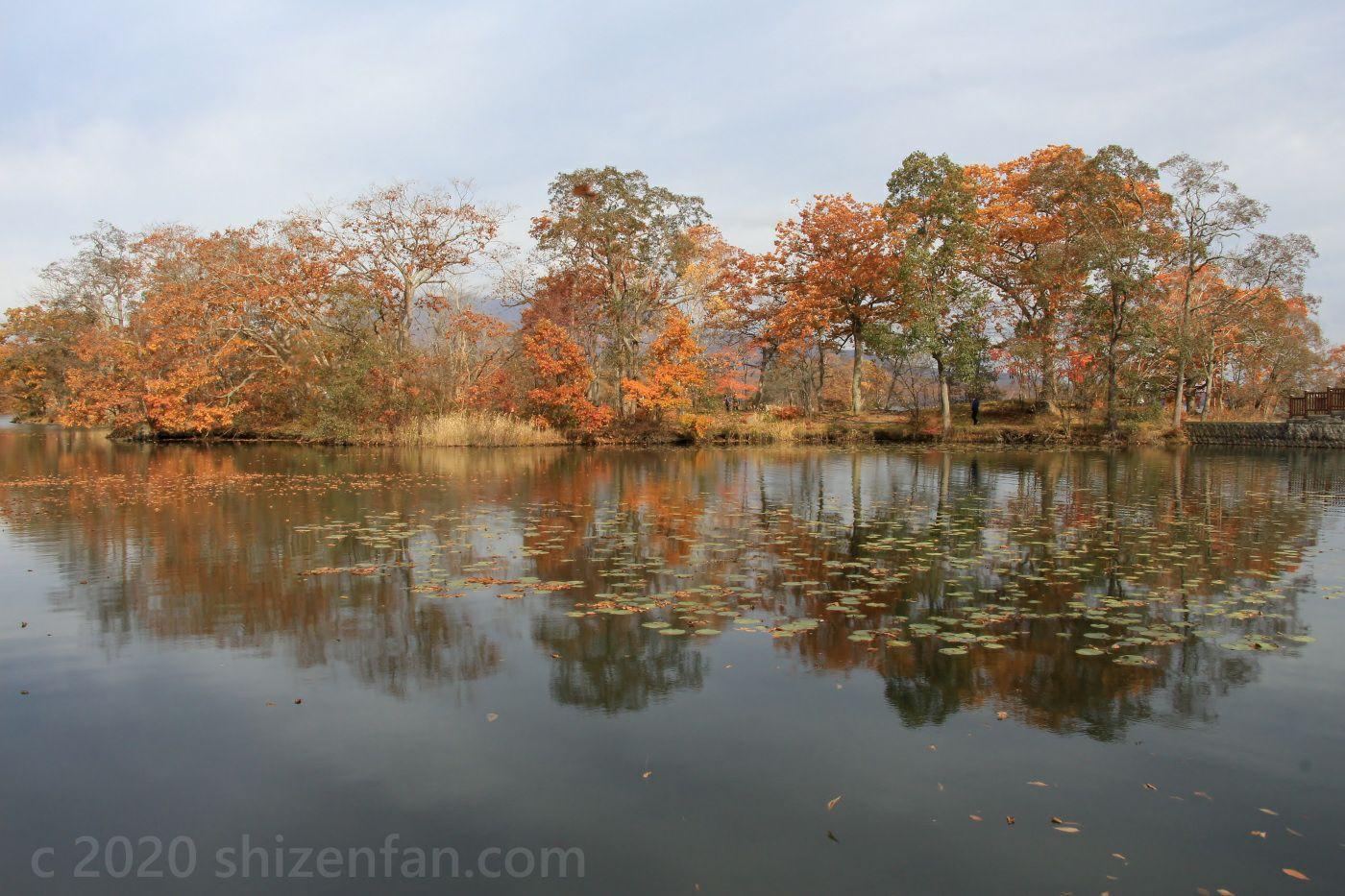 晩秋の大沼国定公園 紅葉した木々と木々を映した湖面