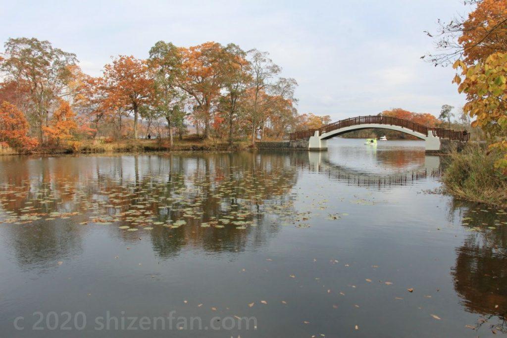 大沼国定公園 池に架かった橋と紅葉した木々