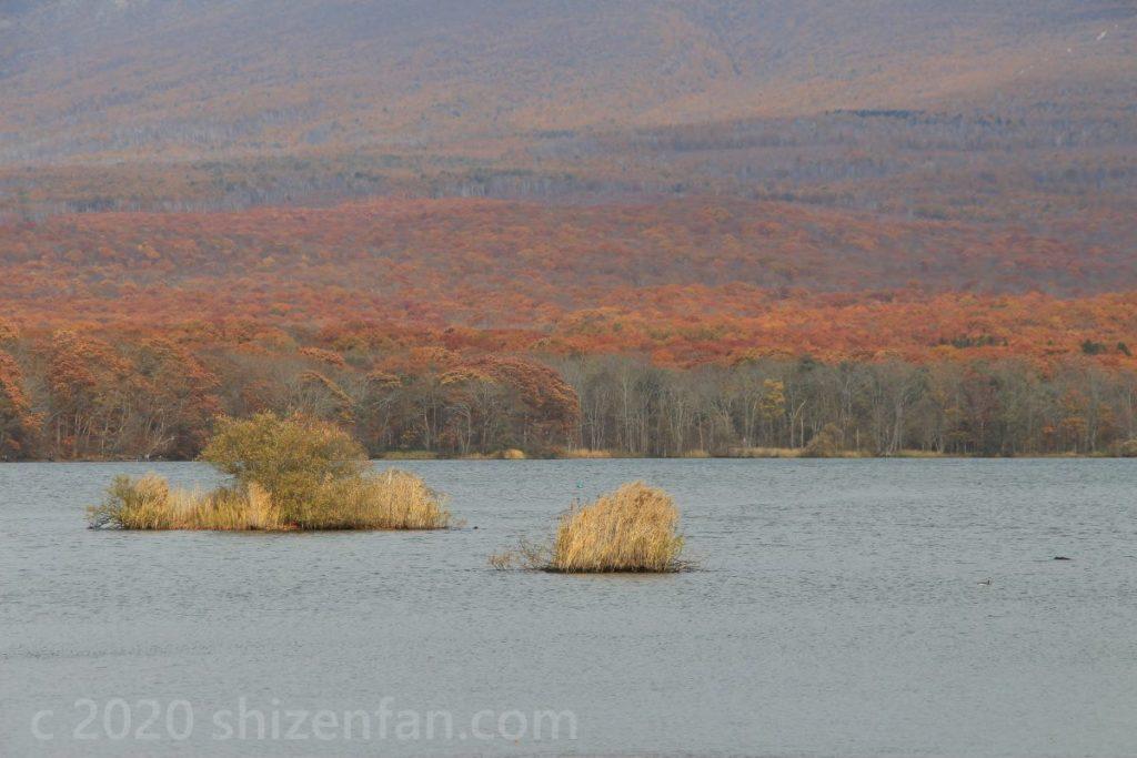 紅葉期の北海道駒ヶ岳のオレンジ色に染まる裾野