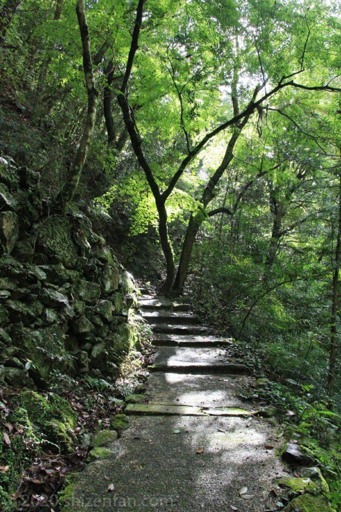 緑に囲まれた臼杵・白馬渓の石段