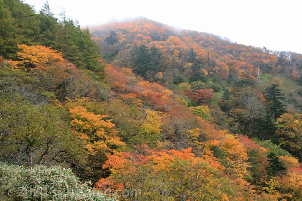 紅葉真っ盛りの四国剣山