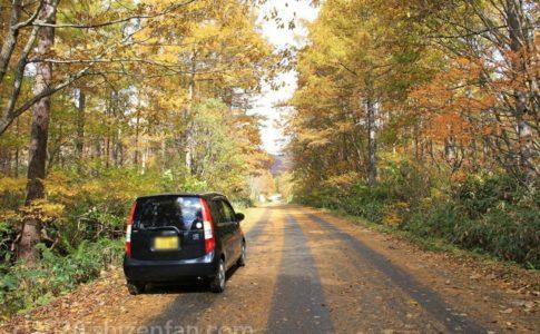 黄色の紅葉に包まれた道と黒い軽自動車